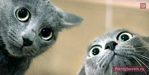 как подружить котов и кошек в одной квартире: взрослых, котят